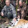 Путин выпустит на волю спасенных амурских тигров