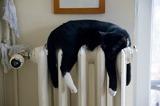 К концу недели во всех жилых домах в Москве будет тепло