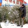 В Нью-Йорке стартовал фестиваль по утилизации рождественских ёлок