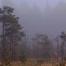 В Приднестровье заблудились два украинских пограничника