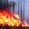 Лесные пожары принесли не только смог, но и миллиардные убытки