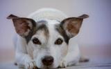 Исследователи обнаружили у собак способность «считать в уме»