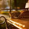 Перед Масленицей котов-хранителей из Эрмитажа раздадут желающим