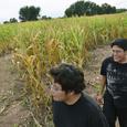 В Литве туристов приглашают в кукурузный лабиринт