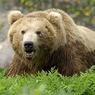 Житель Башкирии убил медведя, растерзавшего корову
