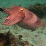 Биологи не поверили, что морской житель - не Покемон