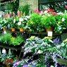 Россельхознадзор заявил о проблеме с цветами и вредителями