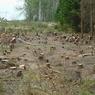 В резиденции Путина вырубили лес. Кремль потребовал объяснений
