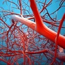 Российские ученые нашли способ ускорить регенерацию сосудов