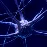Нейробиологи выяснили, как мозг фиксирует время событий