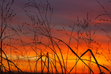 Солнце в гневе на землян - вспышки Х-класса одна за одной (ФОТО)