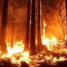 В Канаде началась эвакуация из-за лесных пожаров