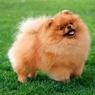 В Якутии бухгалтер исправительной колонии купила собаку за шесть млн рублей