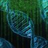 Ученые обнаружили ген, заставляющий людей толстеть