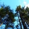 На радость экологам: Россия присоединилась к парижскому соглашению по климату