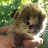 Татарстан выделил 1 миллиард рублей на реконструкцию казанского зооботсада