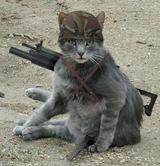 Неизвестный сообщил московской полиции о коте-смертнике