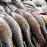 Россельхознадзор завернул две крупные рыбные партии из Украины