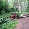 Потерявшегося трехлетнего ребенка нашли спящим в лесу