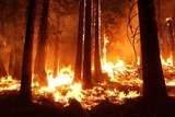 Лесные пожары в Калифорнии: 23 человека погибли