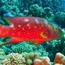 Телеканалы Японии просят неизвестного не есть ядовитую рыбу