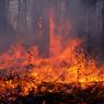 Минприроды: Чиновники пытались скрыть 400 тыс га пожаров