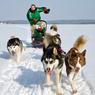 Экспедиция на собачьих упряжках стартует в Костроме