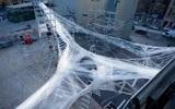 В Европе построят самолеты из искусственной паутины
