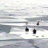 Спасатели спасли более сотни сибиряков, унесенных на оторвавшейся льдине