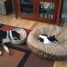 Доказано: это хозяева проживают в доме своего кота, а не наоборот