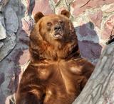 МВД: В Красноярском крае медведь задрал охотника