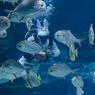 Пришельцы рядом с нами: гусеница-монстр и сумчатая акула (ФОТО, ВИДЕО)