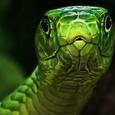 Американец попытался заняться сексом со змеей, напомнившей ему экс-супругу