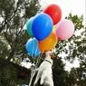 Терьер Твинки установила рекорд Гиннесса по лопанию шаров (ВИДЕО)