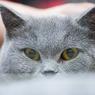 Вернисаж кошачьих портретов открывается в Петербурге