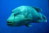 Снова - массовая гибель рыбы, на сей раз - под Оренбургом