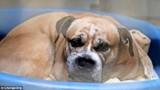 Сотни семей вызвались приютить пса, который загрыз женщину-инвалида и ее сына