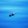 Бутылка несла послание по морю двести лет (ФОТО)