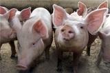 СМИ: В Дании официально запретили секс с животными ради имиджа страны