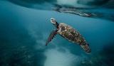 Учёные предупредили о новой скрытой угрозе для жизни океана