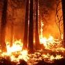 СК проверит сообщения о причастности чиновника к поджогу леса