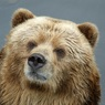 За сбитого электричкой медведя суд обязал РЖД заплатить, но не пострадавшему
