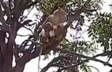 В Индии обезьяны напали на лаборанта и сбежали с тестами пациентов на Covid-19