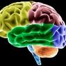 Ученые открыли эффективный и дешевый способ лечения болезни Альцгеймера