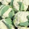 Диетологи назвали самый полезный овощ в мире