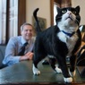 Кот, работающий на МИД Британии, заподозрен в шпионаже
