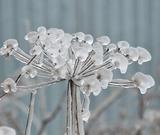 С октябрем в центральную Россию придет резкое похолодание