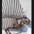 Ученые выяснили, как и когда эволюционировал позвоночник млекопитающих