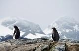 Ученые в Антарктиде «раскрыли секрет» возрастом 120 000 лет