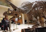 Насморк вечен: им страдали еще динозавры (ФОТО)